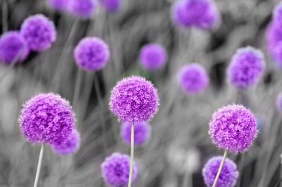 Flowers #1212664