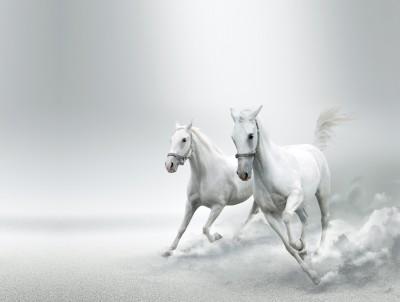 Konie #32884228