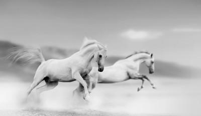 Konie na pustyni