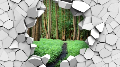 Las w ścianie