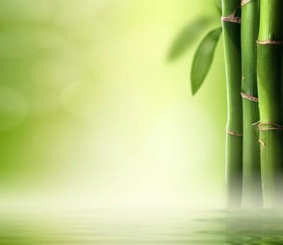 Green bamboo #84266216