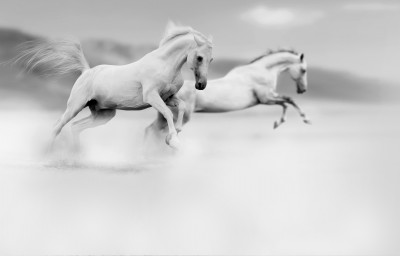 Konie #47317725