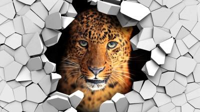 Leopard w ścianie
