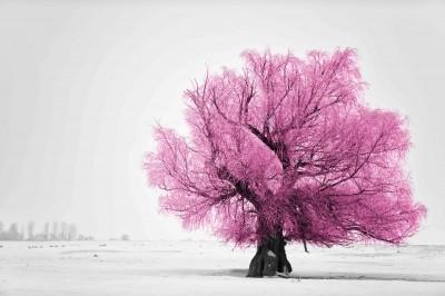 Różowe drzewo