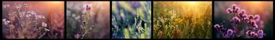 Kwiaty kolaż I