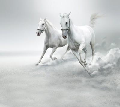 Białe Konie #32884228