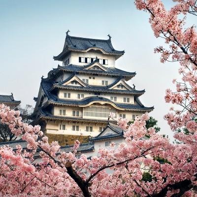 Sakura #36721147