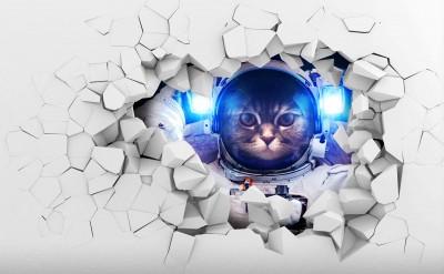 Kot kosmonauta 3D