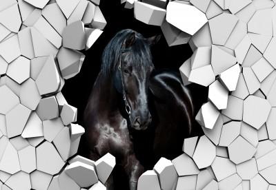 Koń w ścianie II
