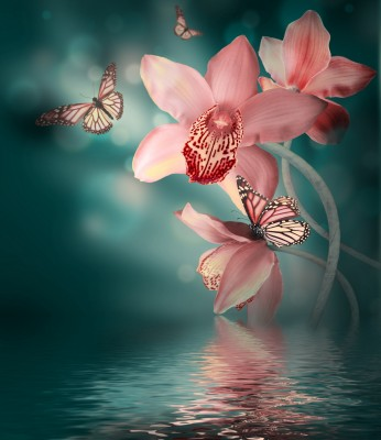 Orchidee #154347134