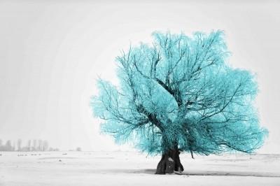Turkusowe drzewo