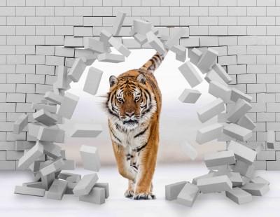 Tygrys w ścianie III